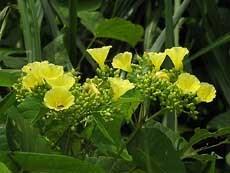 Bim Plants