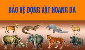Bảo vệ động vật hoang dã