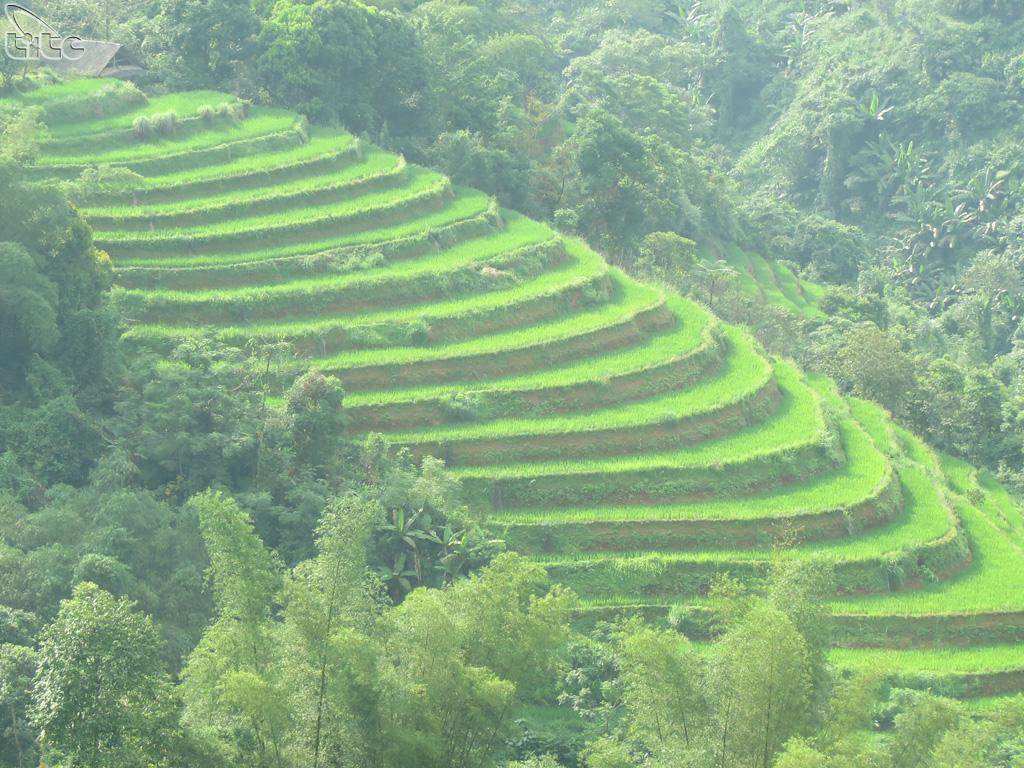 Với vẻ đẹp kỳ vĩ này, ruộng bậc thang Hoàng Su Phì đã được công nhận là Di tích cấp quốc gia vào năm 2012